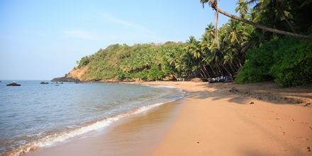 Strand i Goa i Indien.