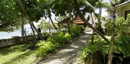 Haven på Golden Beach Resort i Ao Nang, Krabi i Thailand.