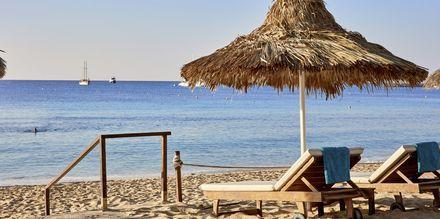 Stranden ved Hotel Grecian Bay, Cypern.