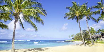 Strand på øen Kauai i Hawaii.