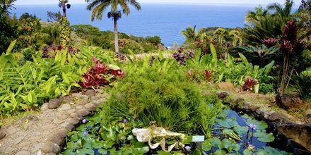 Botanisk have på Maui.