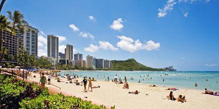 Stranden Waikiki Beach i Honolulu på Hawaii.