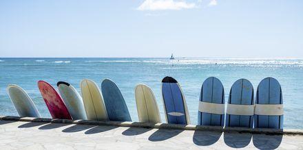 Med høje bølger og mange strande er Honolulu et perfekt rejsemål for surfere.