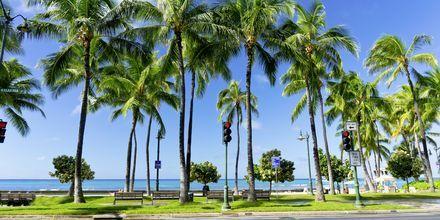 Honolulu er et skønt rejsemål takket være klimaet - her er der varmt året rundt.