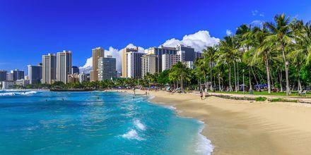 Stranden i Honolulu - Waikiki - og Honolulus skyline.