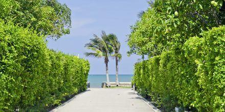 Strand i Hua Hin i Thailand.