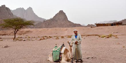 Ørkenlandskab i Hurghada,  Egypten.