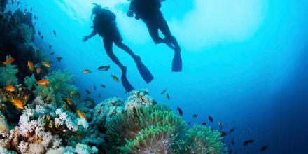 Dykning i Hurghada, Egypten.