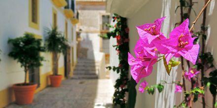 Smukke frodige stræder er typisk for Ibiza.