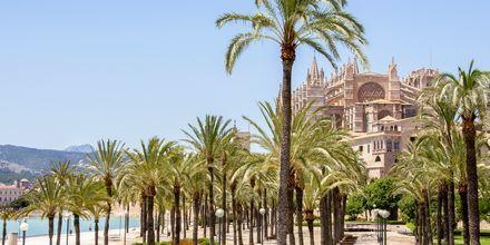 Katedralen i Palma på Mallorca, Spanien.