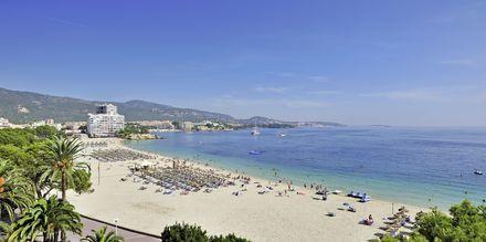 Udsigt over stranden fra Hotel INNSiDE by Melia Cala Blanca.