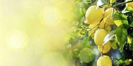 Friske citroner.