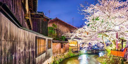 Floden Shirakawa i Kyoto, Japan.