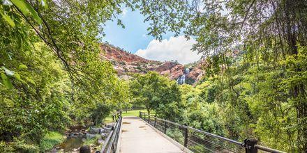 Naturreservatet Walter Sisulu Botanical Garden i Johannesburg er en rolig oase.