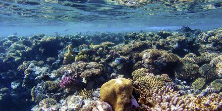 Dykning i Det Røde Hav