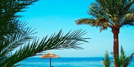 Tala Bay i Aqaba-området i Jordan.