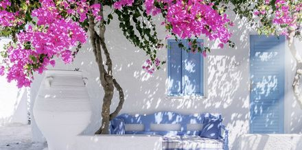 Bougainvillea på Santorini, Grækenland.
