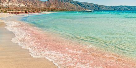 Den berømte strand Elafonissi på Kreta med sit smukke, rosa sand.