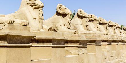 Udflugt til Karnak, Krydstogt på Nilen med MS Alyssa, Egypten