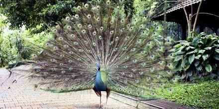 Kuala Lumpur har en fuglepark med 200 arter og 3000 fugle.