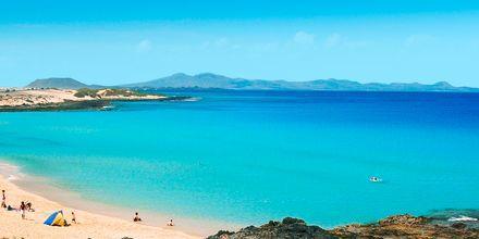 Stranden ved Hotel Las Marismas på Fuerteventura, De Kanariske Øer, Spanien