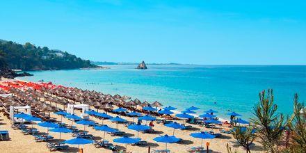 Costa Beach i Lassi på Kefalonia, Grækenland.