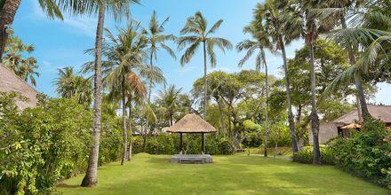 Have på hotel Legian Beach i Kuta på Bali.