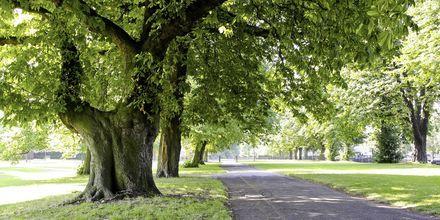 Hyde Park i London, Storbritannien.