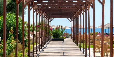 Stranden ved Lutania Beach, Rhodos