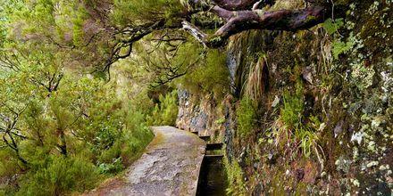 Levada på Madeira, Portugal.