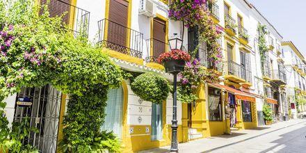 Hvide huse med blomster i Marbella på Costa del Sol.