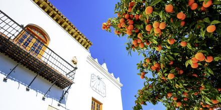 Appelsiner på Appelsintorvet i Marbella.