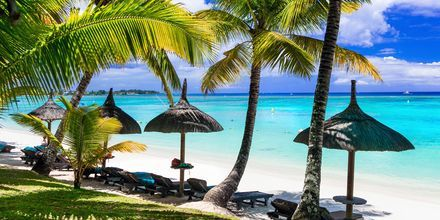 Grønne palmer på Mauritius