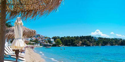 Stranden ved Megali Ammos på Skiathos, Grækenland.