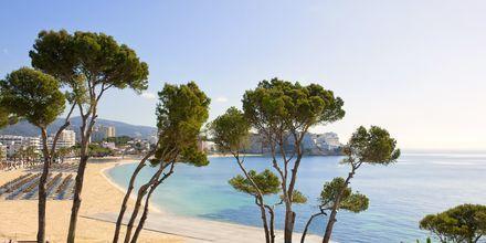 Udsigt fra hotel Melia Antillas Calvia Beach, Mallorca