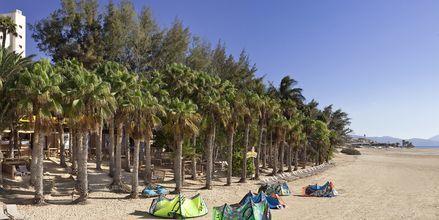 Kitesurfing ved Hotel Melia Gorriones på Fuerteventura, De Kanariske Øer, Spanien