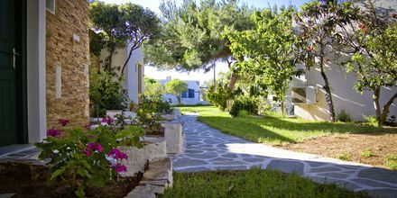Have på Hotel Naxos Beach på Naxos, Grækenland.