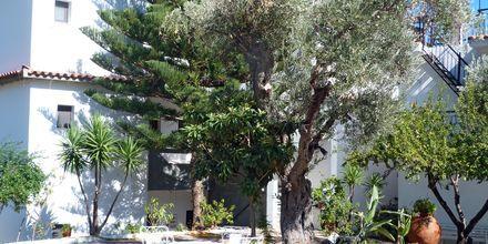 Hotel Nicholas i Megali Ammos på Skiathos, Grækenland.