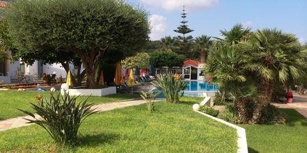 Have på Hotel Nikolas Villas ved Hersonissos på Kreta.