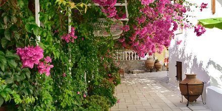 Hotel Olympia Village i Kokkari på Samos, Grækenland