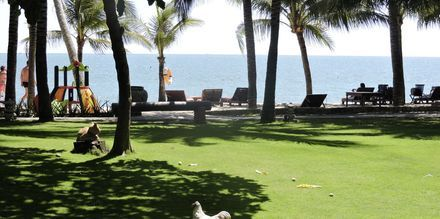 Haven på Oriental Pearl Resort i Phan Thiet, Vietnam