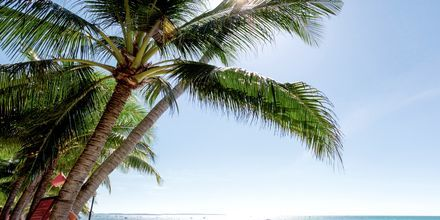 Stranden ved Oriental Pearl Resort i Phan Thiet, Vietnam