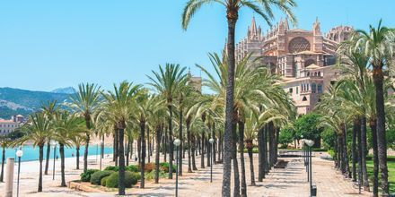 Byens mest kendte landemærke er katedralen La Seu. Palmerne følger stien langs vandet.