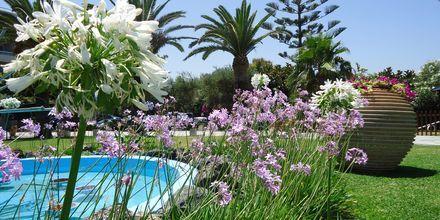Have på Hotel Panorama på Kreta, Grækenland.