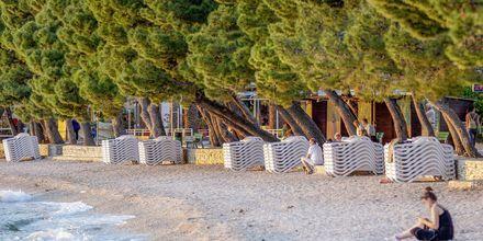 Stranden ved Hotel Park i Makarska, Kroatien.
