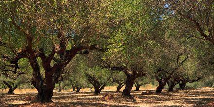 Makrigialos på Kreta, Grækenland