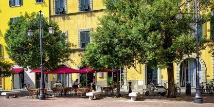 Café i Pisa, Toscana, Italien.
