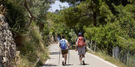 Fine vandringsmuligheder i Puerto de Sóller på Mallorca, Spanien.