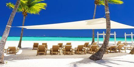 Strand på Den Dominikanske Republik.