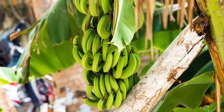 De grønne bananer er karakteristiske for Den Dominikanske Republik.